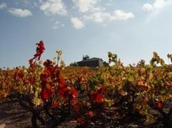Viñedos de Beaujolais