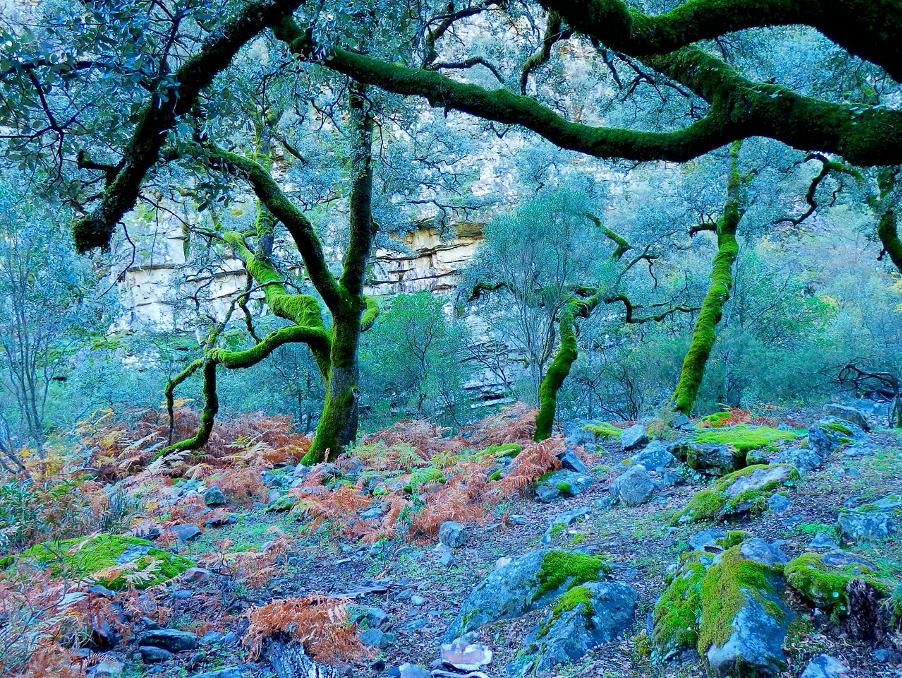 bosque en las batuecas