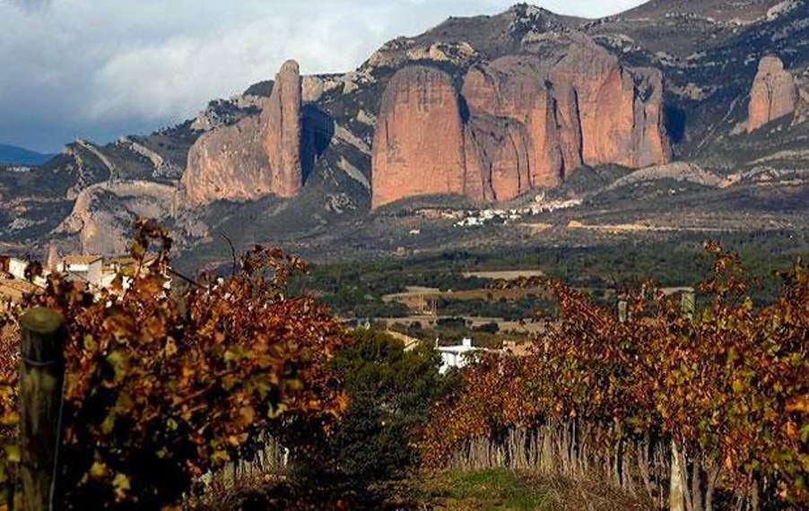 viñedos de Bodegas Pegalaz