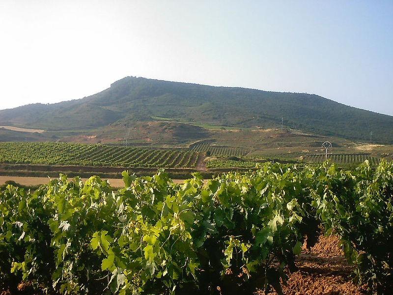 viñedos en Ventosa, La Rioja