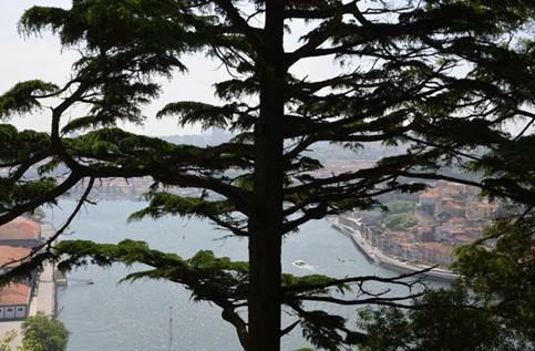 vista sobre el Duero desde el palacio de cristal en Oporto