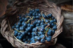 uvas para el vino